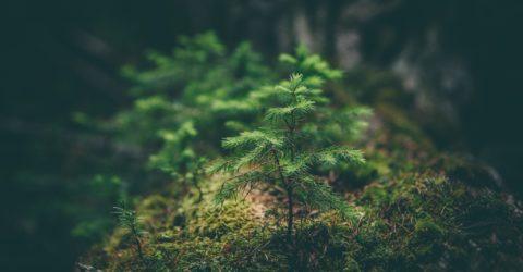 Respeito pelo Meio Ambiente